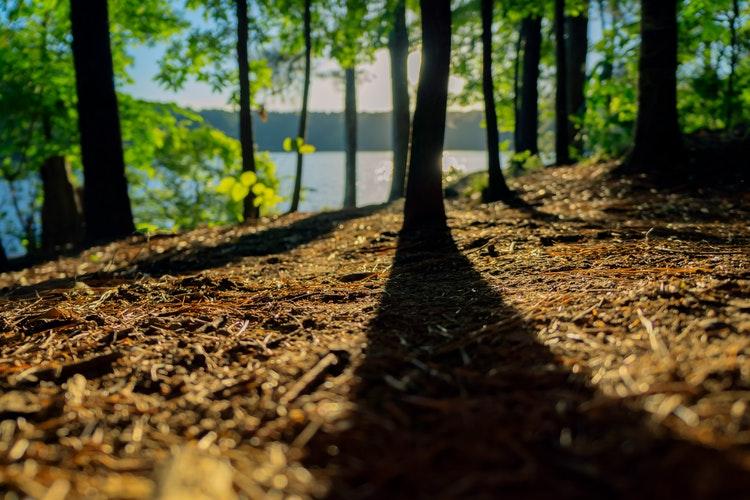 forestsh